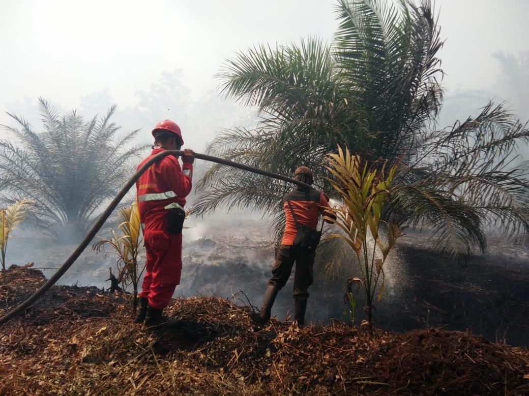 Kembali Muncul, Dua Titik Api Hanguskan 7 Hektare Lahan di Siak